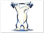 muscular bear
